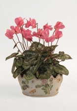 Artificial Silk Plants in Pots