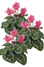 Cyclamen pink 3 - Artificial Flower Arrangement