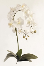 Orchid Phalaenopsis Large - Artificial Flower Arrangement