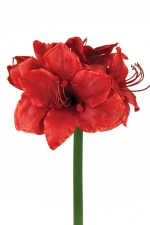Amaryllis Red - Artificial Flower Arrangement