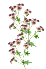 Astrantia Pink 3 - Artificial Flower Arrangement