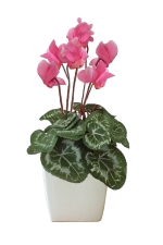 Bianca.  Silk cyclamen - Artificial Flower Arrangement