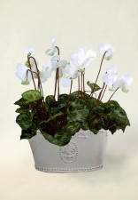 Pippa.  Silk cyclamen - Artificial Flower Arrangement