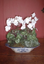 Aisha (only one in this bowl) - Artificial Flower Arrangement