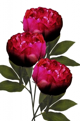 Peony Burgundy 3 Artificial Flower Arrangement