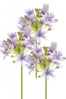 Agapanthus 3 Artificial Flower Arrangement