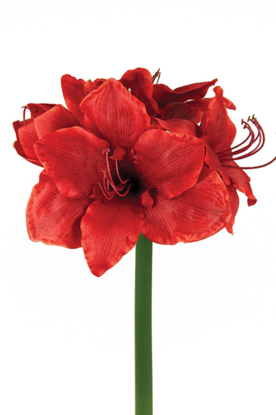 Amaryllis red silk flowers artificial arrangements pene dene flowers amaryllis red artificial flower arrangement mightylinksfo