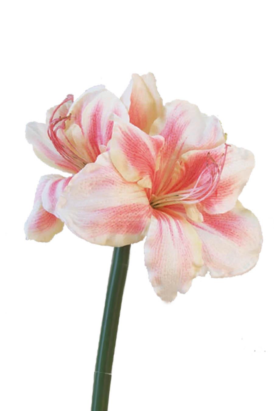 Amaryllis pink silk flowers artificial arrangements pene dene amaryllis pink artificial flower arrangement mightylinksfo