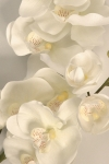 Orchid Phalaenopsis Large - Silk Flowers Artificial Flower Arrangement