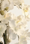 Amelia - artificial moth orchids - Silk Flowers Artificial Flower Arrangement