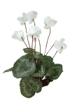 Cyclamen white 3 - Silk Flowers Artificial Flower Arrangement